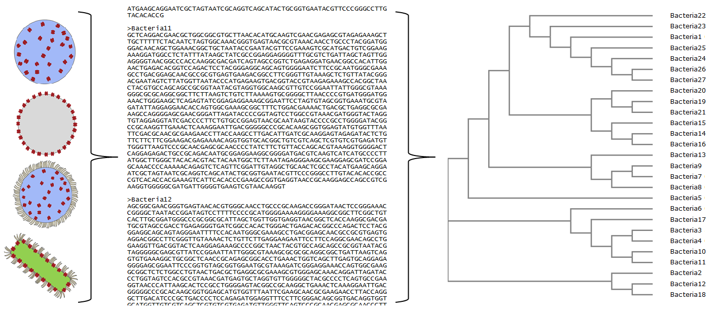Worksheets Phylogenetic Tree Worksheet phylogenetic tree activity our can help students appreciate how computers us compare genomes
