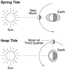 Copy Of Moon Phases/Tides Foldable - Lessons - Tes Teach